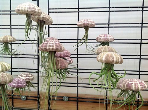 1000 ideas about plant art on pinterest nature pattern for Air plant art