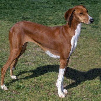 17 Best Ideas About Medium Dog Breeds On Pinterest Cpr