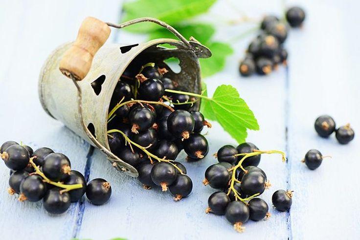 COACĂZELE NEGRE: superalimentul cu beneficii incredibile pentru sănătate - Top Remedii Naturiste