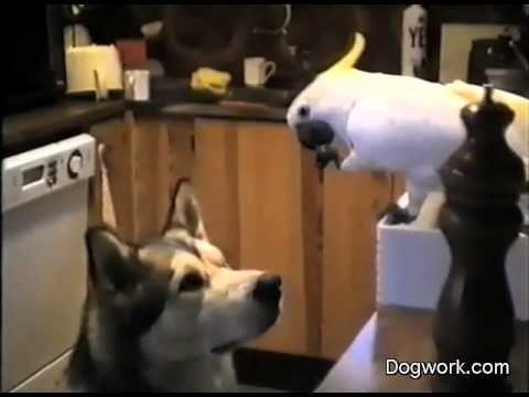 "ECADF: Spaghetti Night -- The cockatoo feeding the dog.   ""Amazing!"" -LJ"