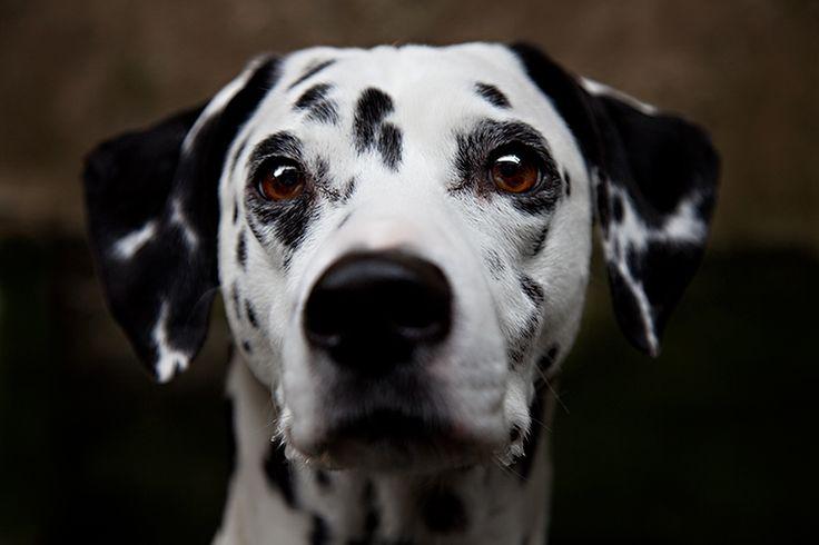 Pin by Lauren Chavez on Puppies Galore! Mans best friend