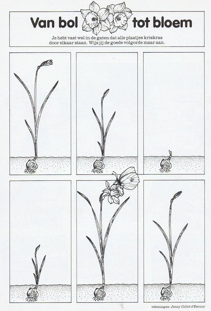 ,Van bol tot bloem