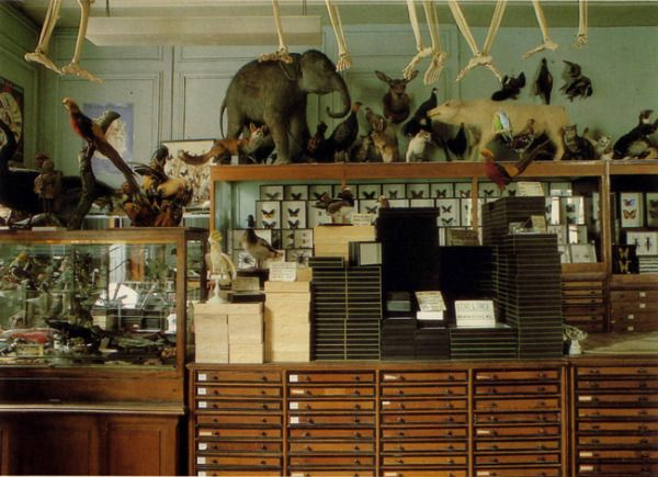 Deyrolle, the famous Parisian taxidermy boutique known for their wild curiosities.