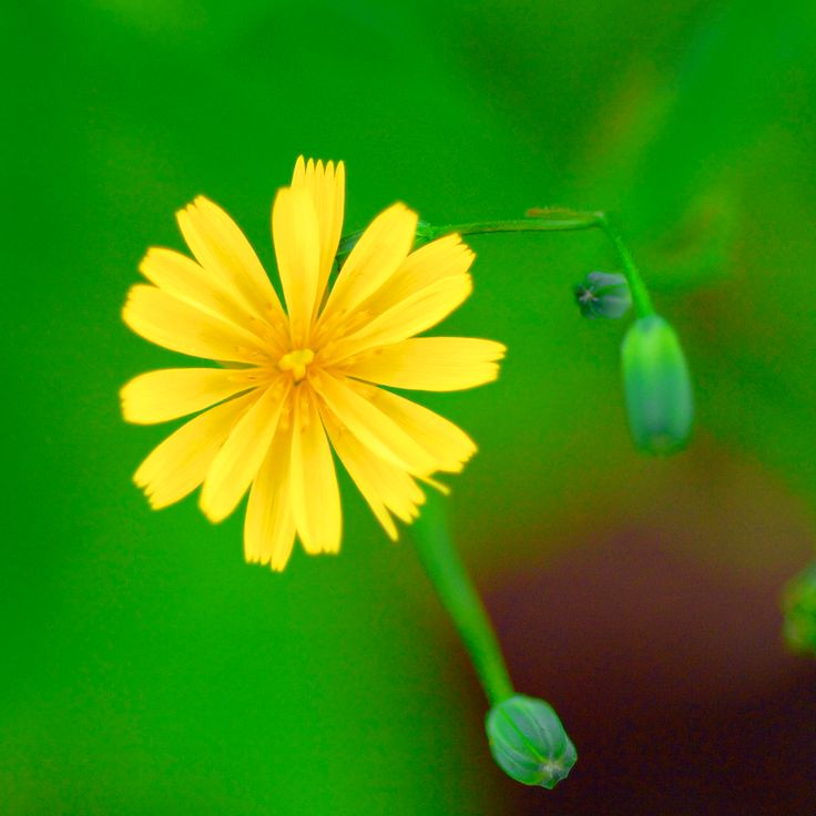 Photographer Pernille Westh | Yellow flower · Get my 7 FREE basic photography tips - you need to know! http://pw5383.wixsite.com/free-photo-tips