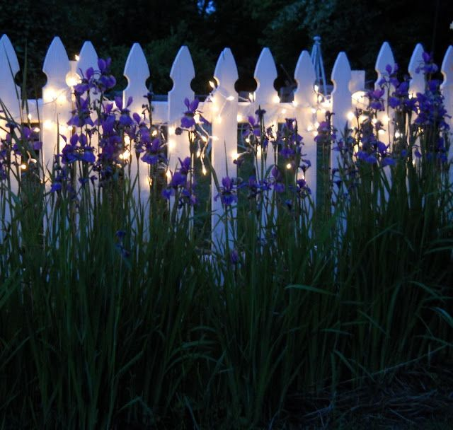 twinkle lights along the white picket fence!!!