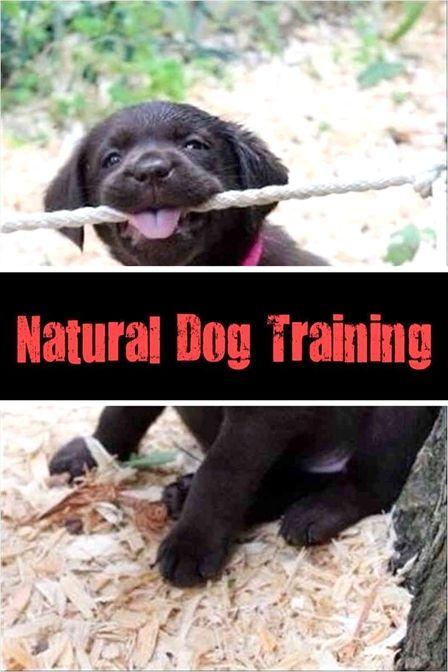 Dog Training Food Pouch Side By Side Dog Training Utah Dog
