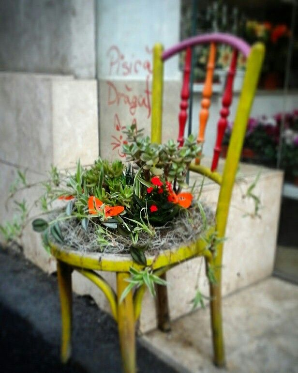 Chair with plants...