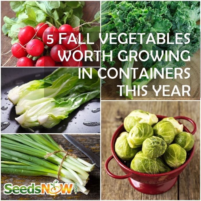 Fall winter season 5 cool weather vegetables to grow - Best vegetables for container gardening ...