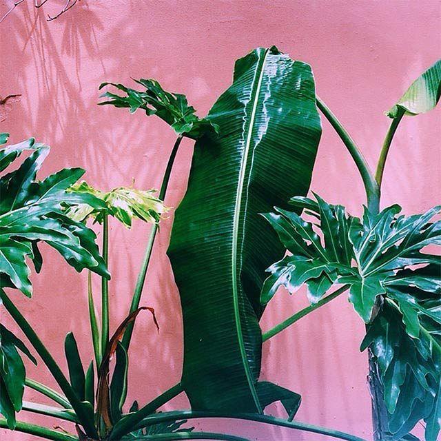 plants-on-pink-8