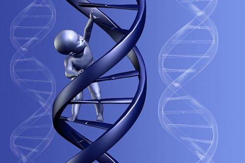 El ADN transmite la memoria de nuestros antepasados, nuevo estudio científico