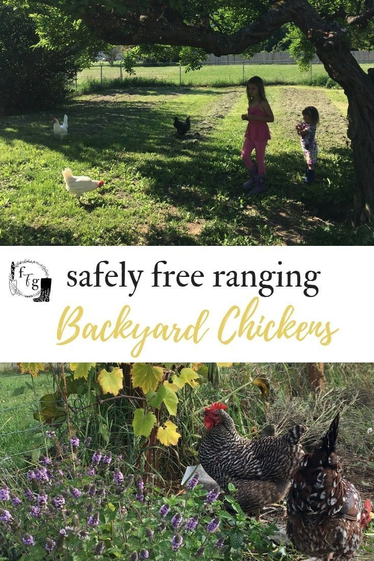 eb0c7503a3e30068c24df0c66be72ab3 - Gardening With Free Range Chickens For Dummies