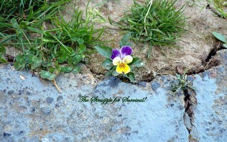 Life's Struggle to Survive - Flowers Wallpaper ID 127091 - Desktop Nexus Nature
