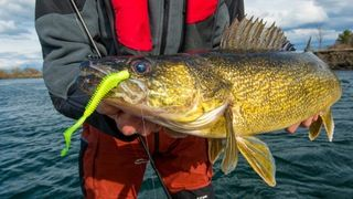 These tips will help you master the drop shot presentation for spring and summer walleyes.