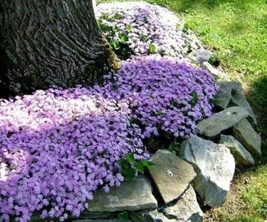 Ültess gyönyörű virágokat a kertbe, ezek a növények a fák köré is ültethetőek! - Bidista.com - A TippLista!