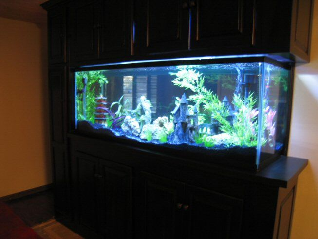 "Read: ""Here is my 180 gallon aquarium that can be seen in both my office and my movie theater bedroom. It is made from starphire glass...There is a step ladder in the long vertical cabinet on the left. And of course I feed my fish through the top cabinets...What I had to do to fix the cloudy fish tank water was I had to do partial water changes every day (about 20% water change), while also continuously cleaning out the gravel each time."""