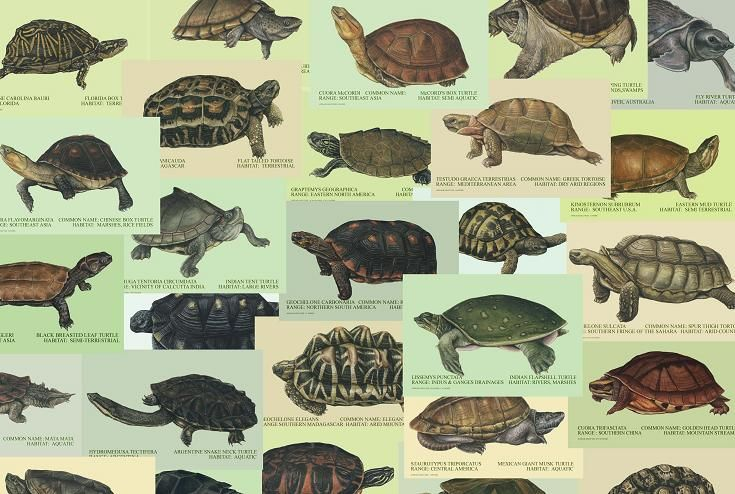 Individual 11 Quot X 14 Quot Turtle And Tortoise Water Color