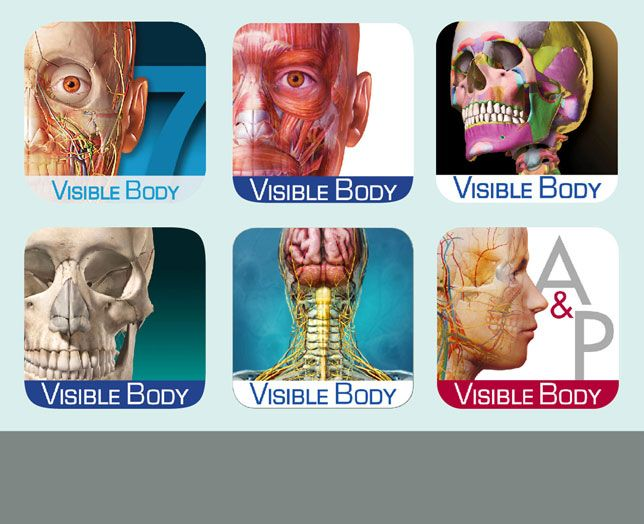 211 Best Awesome Anatomy Images On Pinterest Activities Anatomy