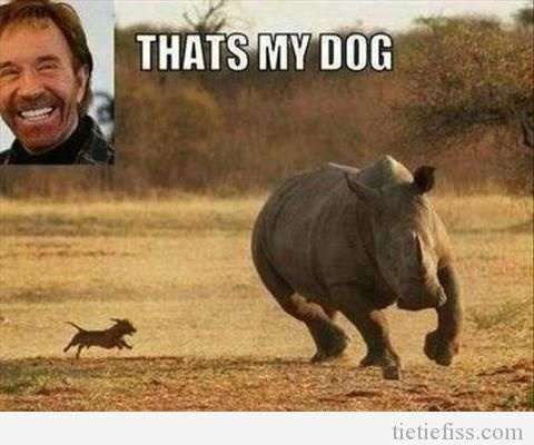 funny; I do not know why I love Chuck Norris jokes