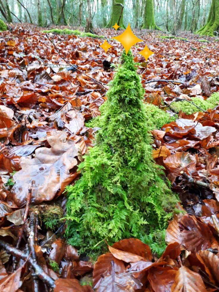 Tiny Christmas Tree