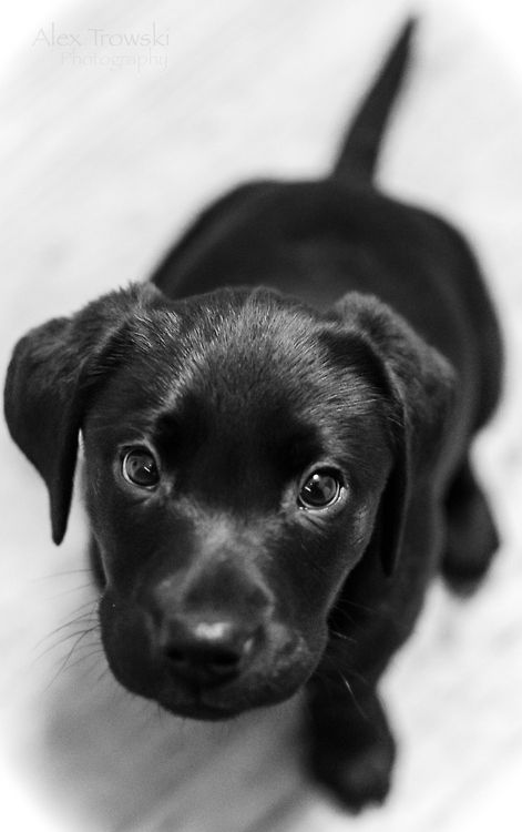 This would be Nico's puppy