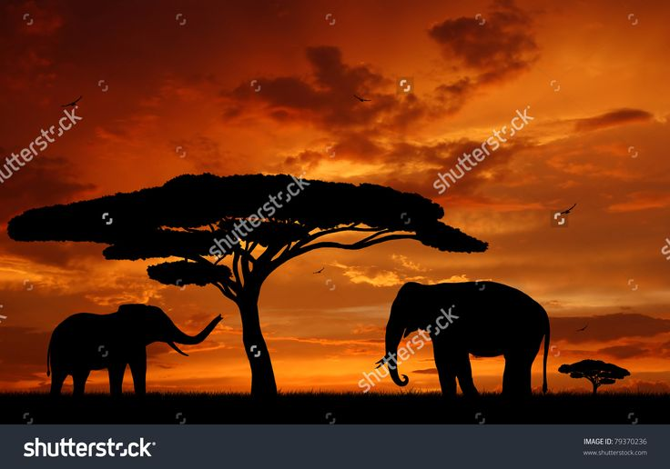 Silhouette Two Elephants In The Sunset Stock Photo 79370236 : Shutterstock