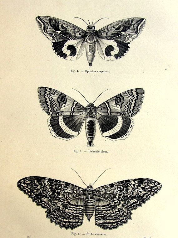 1860 antique moths butterflies print, original vintage moth plate, french lepidotera  engraving, papillon butterfly illustration.