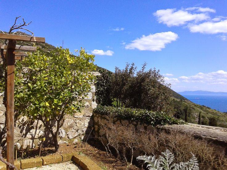 Albero di limoni con vista panoramica all'Orto dei Semplici Elbano, Rio nell'Elba 6 Aprile 2015