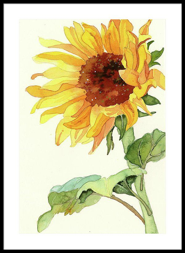 Sunflower Framed Print By Kelly Chester In 2020 Watercolor