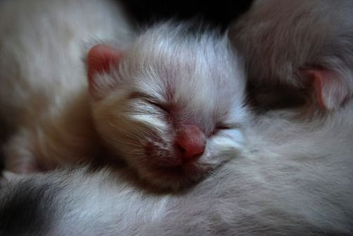 Cute Fluffy Black Kittens Happy Birthday Cute Animals Gif Whenever Cute Baby An With Images Newborn Kittens Kittens Cutest Cute Animals