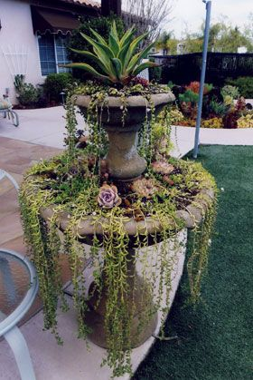 Welcome! - Living Designs by Linda. Water-wise garden planning and design services for all of San Diego County, Rancho Santa Fe, La Jolla, P...