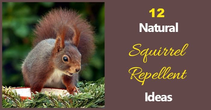 Best 25 Squirrel Repellant Ideas On Pinterest Deer Repellant Deer Garden And Deer Resistant
