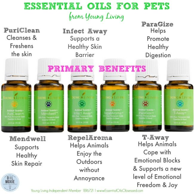 Just Announced – Individual Oils from the Animal Scents Collection Now Available! The essential oils in the Animal Scents Care Collection provide peace of mind and natural wellness solutions for all animals, whether domestic, exotic, large, or small. To purchase essential oils for your animal or pet, or learn more --> http://essentialoilsobsessed.com/essential-oils-for-animals-now-available-individually/