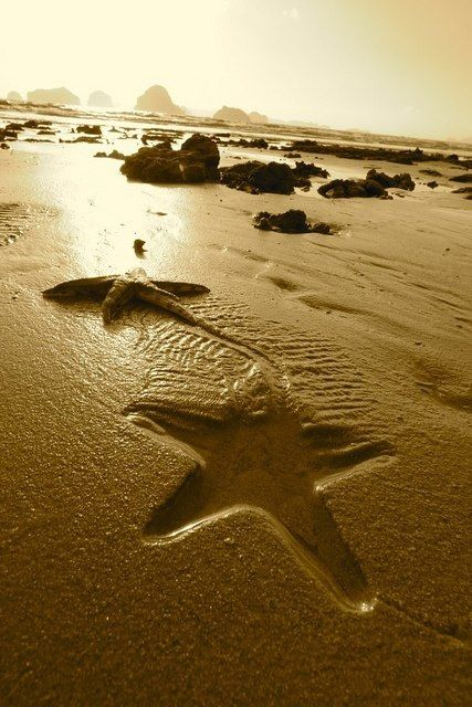 Sea Star on the move