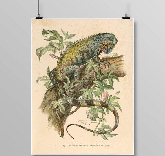 Antique reptile print Lizard poster Vintage Iguana Vintage lithograph Chameleon print Vintage Iguana print 306 – Jason Stanley