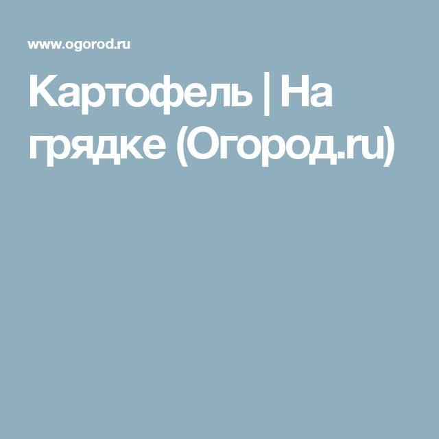 Картофель | На грядке (Огород.ru)