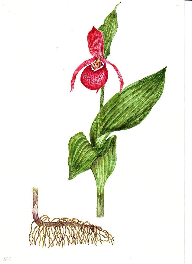 убежден, растения красной книги картинки с описанием как рисовать что многие российские