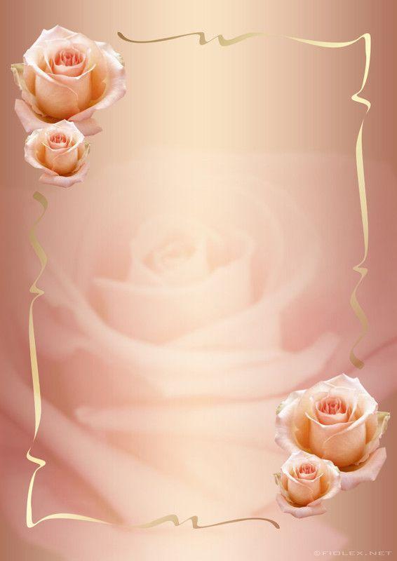 Roses                                                                                                                                                                                 Plus