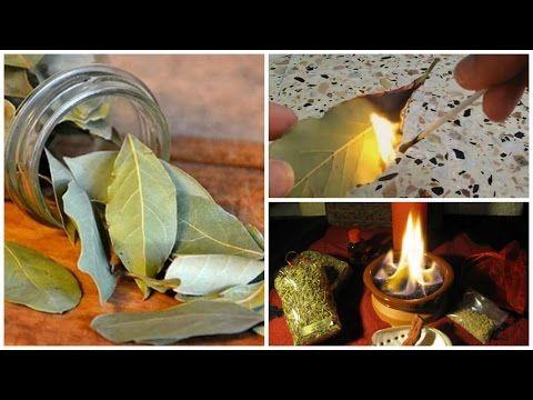 Quema hojas de LAUREL en tu hogar y verás lo que pasa en solo 10 minutos! | Me curo en Salud