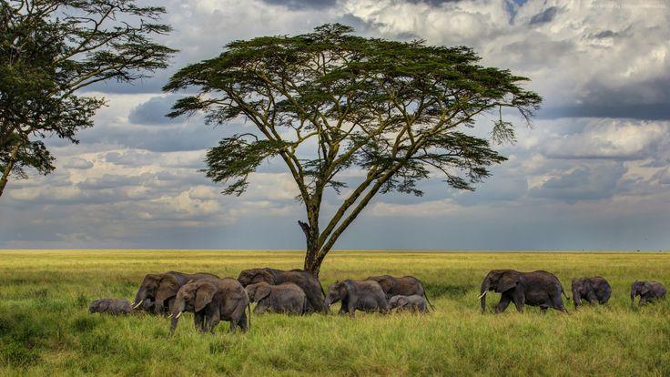 17 Best Ideas About Ipod Wallpaper On Pinterest: 17 Best Ideas About Elephant Wallpaper On Pinterest