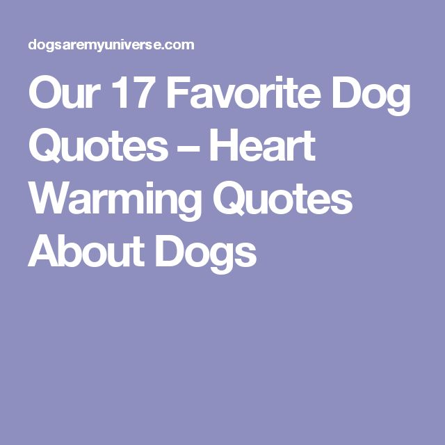 Our 17 Favorite Dog Quotes – Heart Warming Quotes About Dogs