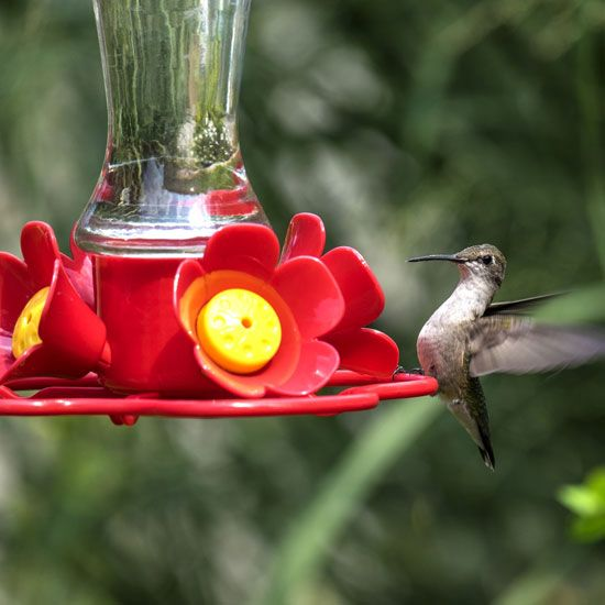"""Monitor Sugar Water Levels in Your Hummingbird Feeder"" Sugar water for hummingbirds is often dyed red. Here's one way to avoid using food coloring, while still monitoring the levels of sugar water from afar. From MOTHER EARTH NEWS Blog"