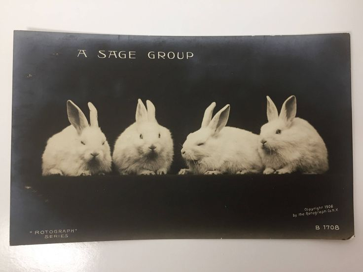 """Antique Rotograph Co. NY Post Card - Copyright 1906 - Real Photograph on Bromide Paper - """"A Sage Group"""" - Four White Rabbits - B 1708 by BagBagSydVintage on Etsy"""