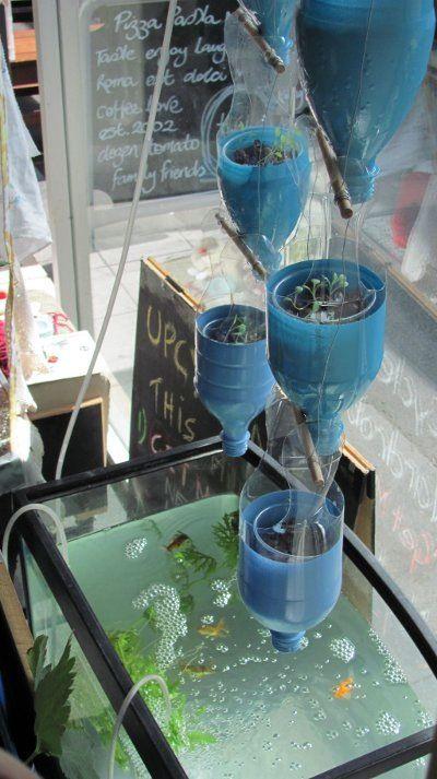 Window Bottle Ponic Aquaponics Aquaponics Hydroponic