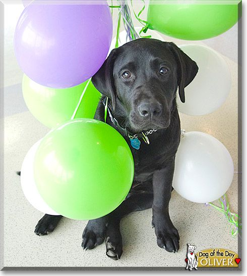 17 Best Ideas About Funny Happy Birthday Pictures On
