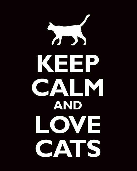 Love cats ♥