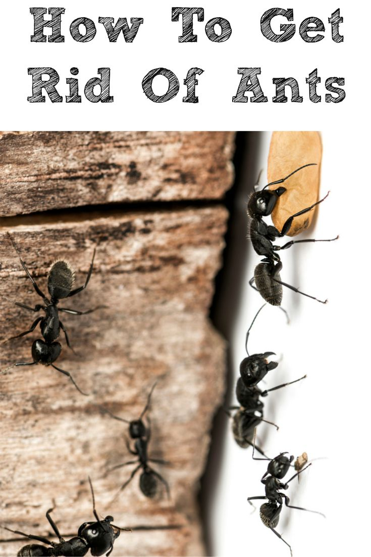 How To Get Rid Of Ants In Your Home!! In The Summer And