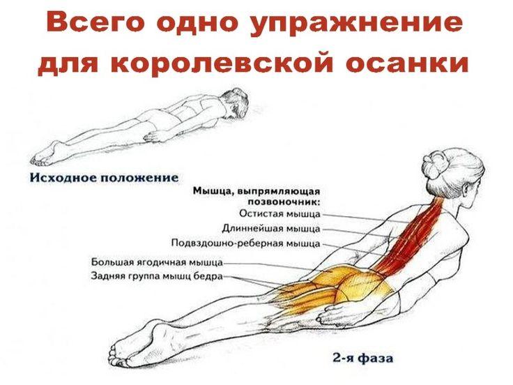 Всего одно упражнение для королевской осанки Разгибание спины лежа — это простое   Полезные советы!
