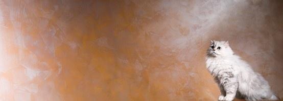 Dolci Seduzioni, nato dall'unione di Spirito Libero e Gioia in versione monocromatica. #giorgiograesan #interiors #design #paintwall
