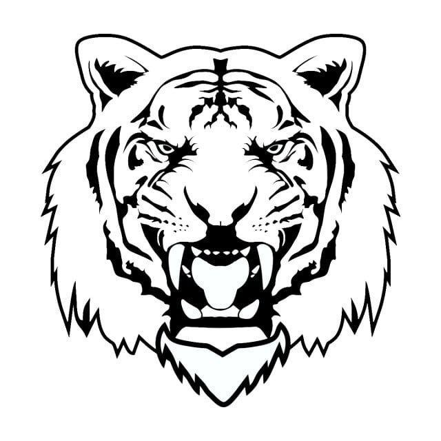 Tigre Vetor Vetor Tigre Animal Imagem Png E Psd Para Download Gratuito Tiger Illustration Tiger Images Tiger Drawing