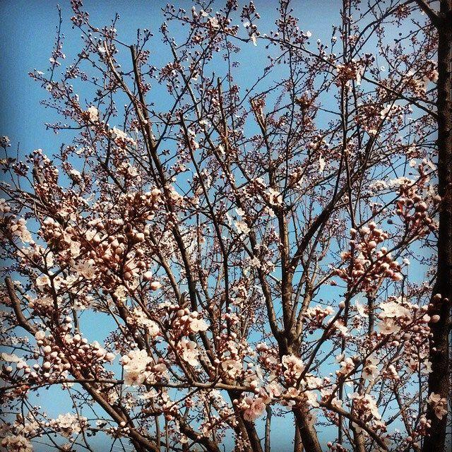 #flower #garden #power #flowerpower #nature #instanature #instamoment #picoftheday #beauty #novellaorchidea #novella #orchidea #raccontierotici #racconti #ebook #ricardo #tronconi #eroticnovel #spring #instaspring #rami #trees #white #pruno